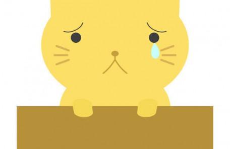 泣いてる猫
