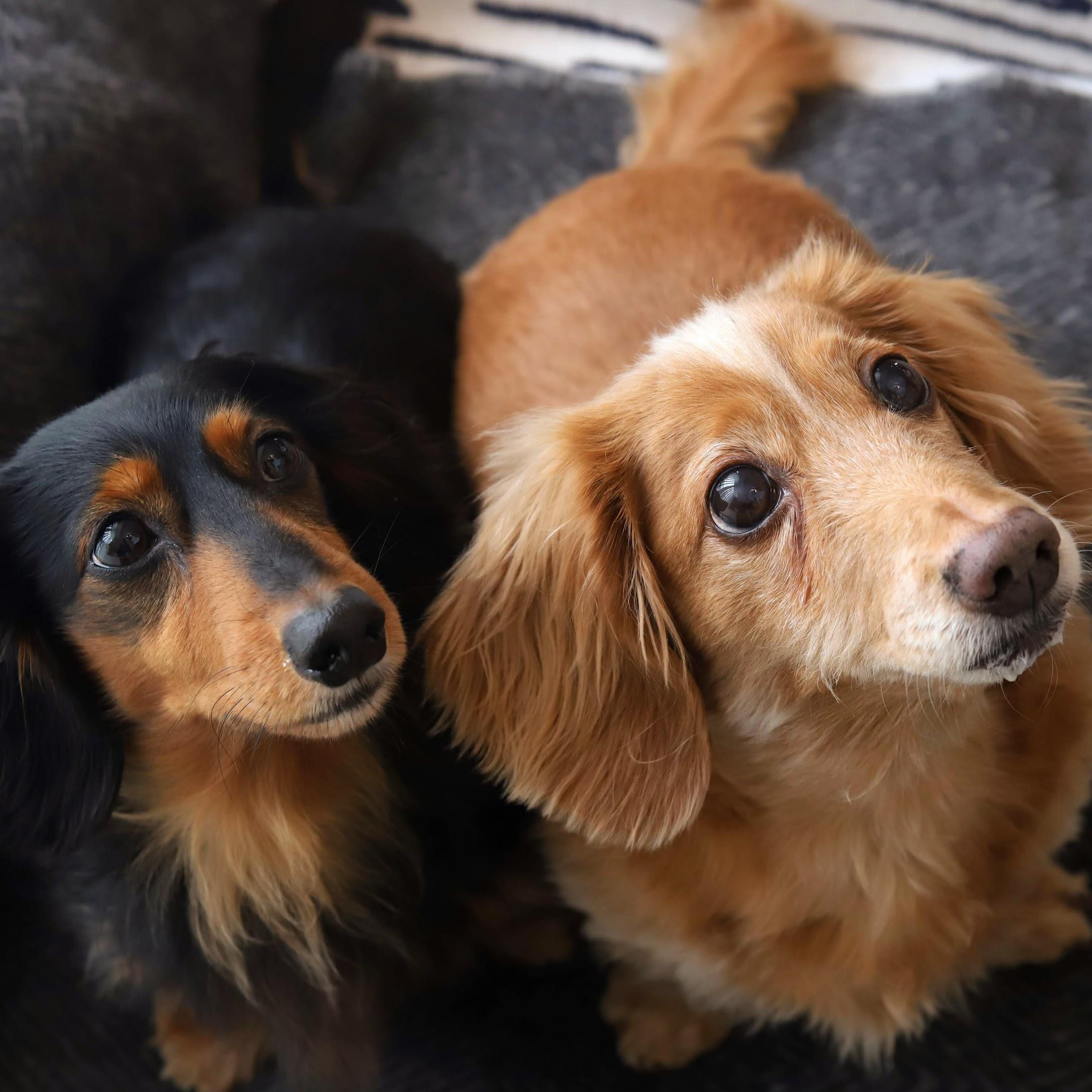 シニア犬にオススメフード